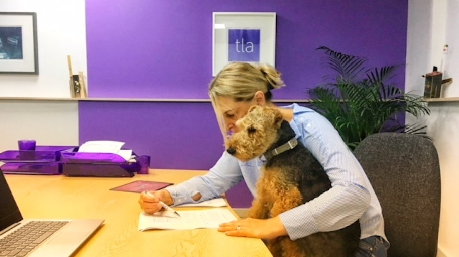 Ted Talks: Bring your dog to work day